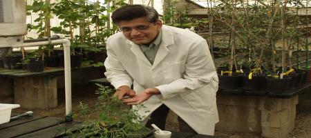 planty pathologist